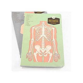 Anatomical notebook - skeleton