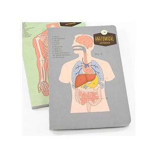 Anatomical notebook - organs