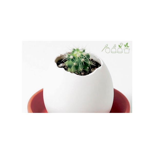 plante oeuf faire pousser eggling cactus. Black Bedroom Furniture Sets. Home Design Ideas