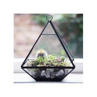 Black pyramid terrarium