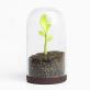 Pot jeune pousse Sprout jar par Qualy