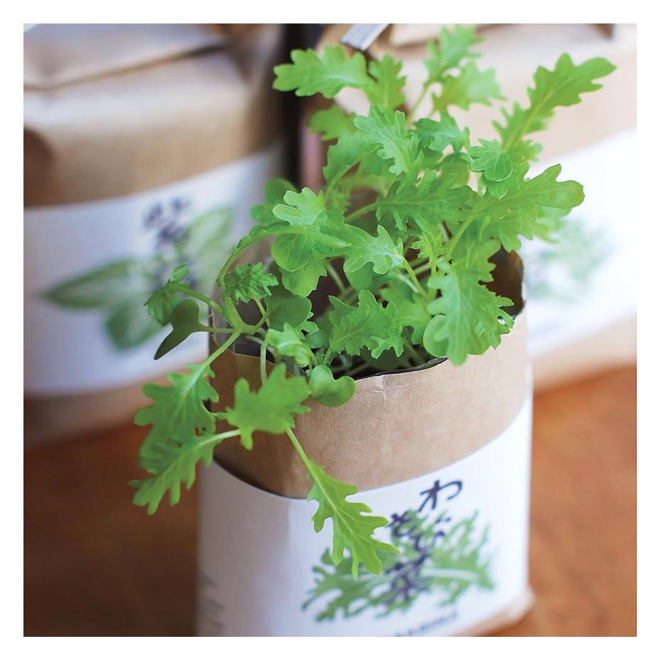 plantes japonaises en sachet faire pousser. Black Bedroom Furniture Sets. Home Design Ideas