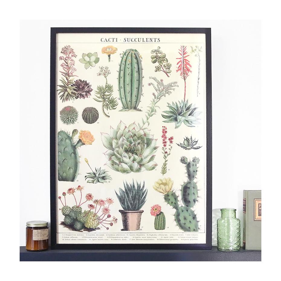 Cactus Et Succulentes Photos
