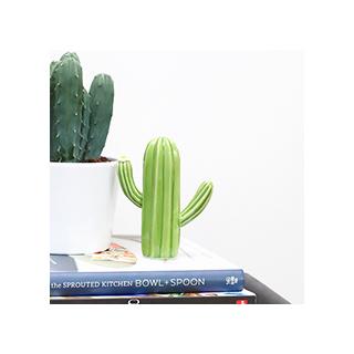 Petit cactus