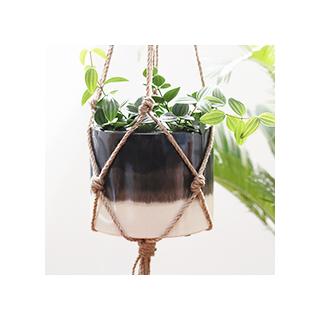 Hanging Bora