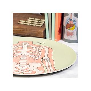 Plateau anatomical - squelette