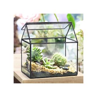 Black house terrarium