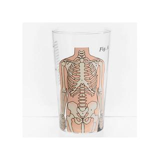 Anatomical tumbler - skeleton