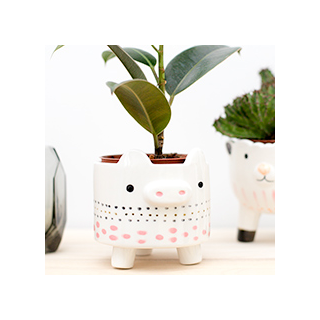 Animal flower pot - cochon