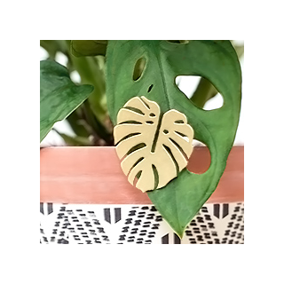 Grand pin's monstera