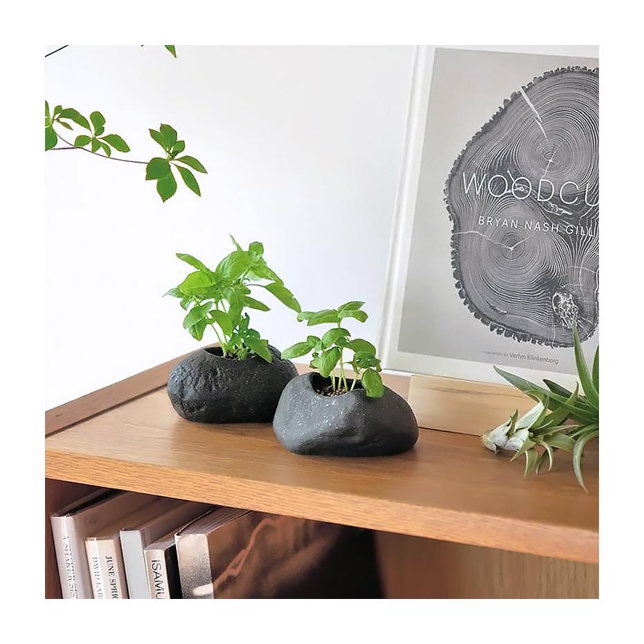 Plante faire pousser dans un pot en forme de pierre - Faire pousser du basilic ...