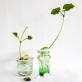 Mélange de graines à faire germer Sprout
