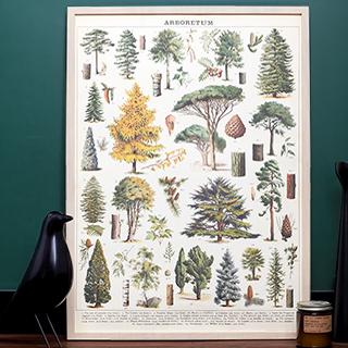 Arboretum print