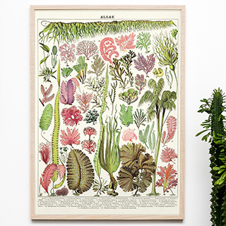 Large print - Algae