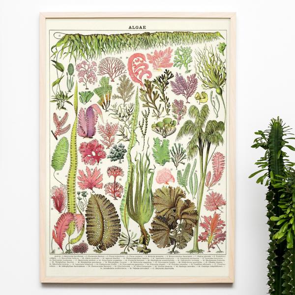 Grande affiche - Algae
