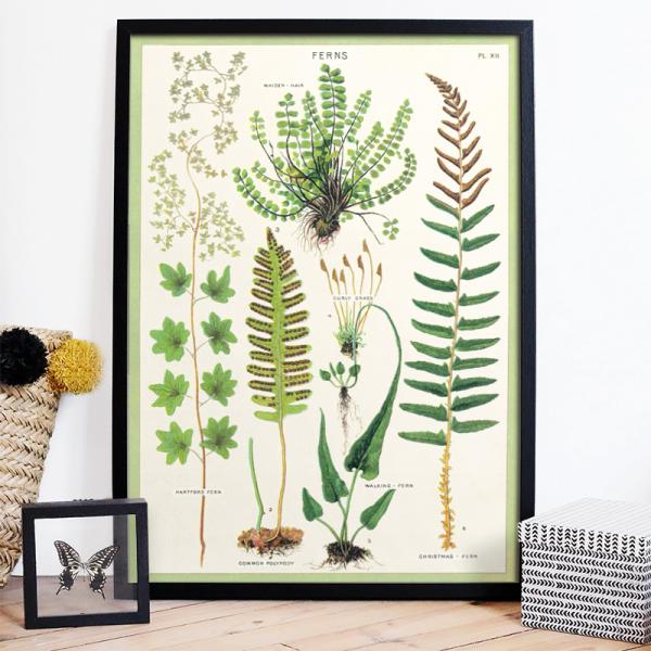 Large print - Ferns