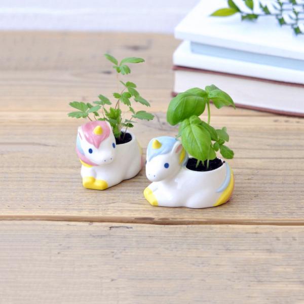 Plante à faire pousser - Unicorn green