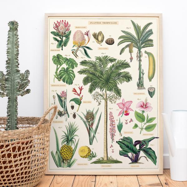 Grande affiche - Plantes tropicales