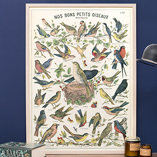 Grande affiche - Oiseaux