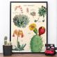 Grande affiche - Cactus et succulentes 2