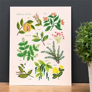 Art print - Herbs & spices