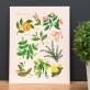 Art print - Herbs & spices