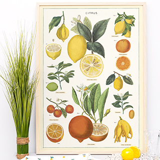 Grande affiche - When life gives you lemons...