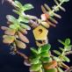 Tiny birdhouse for plants