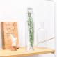 Plant in a large bottle - Slow Pharmacy 1