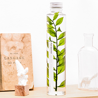Plant in a large bottle - Slow Pharmacy 4