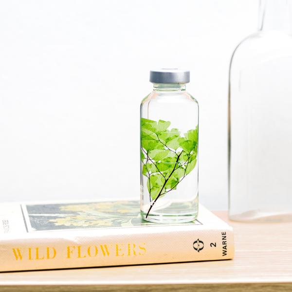 Plant in a bottle - Slow Pharmacy (Specimen 4)