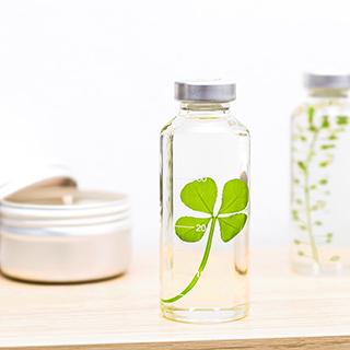 Plant in a bottle - Slow Pharmacy (Specimen 9)