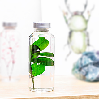 Plant in a bottle - Slow Pharmacy (Specimen 5)