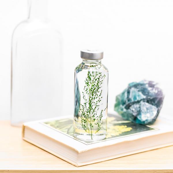 Plant in a bottle - Slow Pharmacy (Specimen 13)