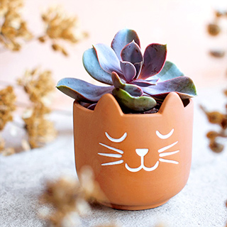 Terracotta planter - Cat's whiskers