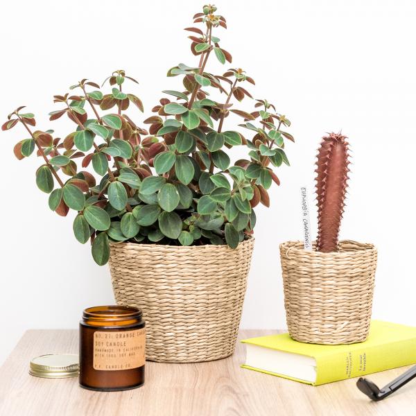 Woven seagrass planter