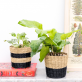 Black stripe seagrass mini planters (set of 2)