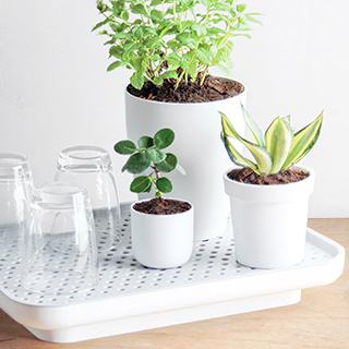 Self watering plant tray - Oasis
