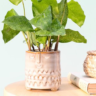 Flower pot / planter - Face imprint (small)