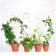 Plant stake - Botanopia