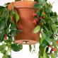 Hanging system for plant pots - Bolty