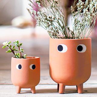 Terracotta planter - Leggy