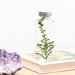 Plant in a bottle - Slow Pharmacy (Specimen 12)