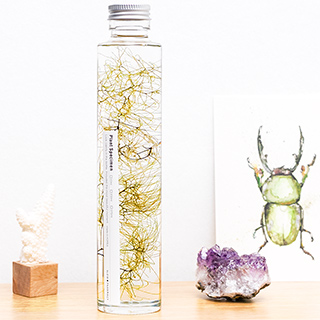Plant in a large bottle - Slow Pharmacy 3