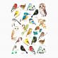 Tea towel Matt Sewell - Birds and owls