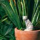 Watering spike - Jangal tiger
