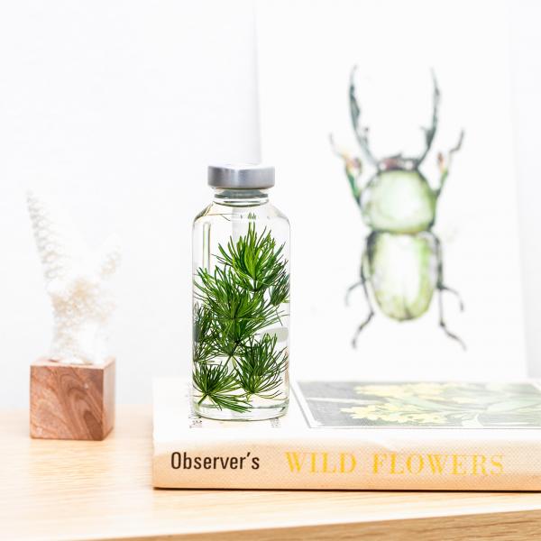 Plant in a bottle - Slow Pharmacy (Specimen 17)