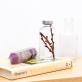 Plant in a bottle - Slow Pharmacy (Specimen 19)
