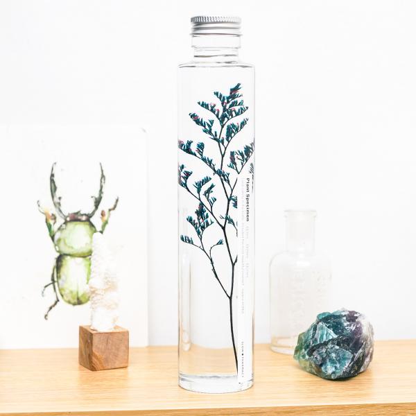 Plant in a large bottle - Slow Pharmacy 12
