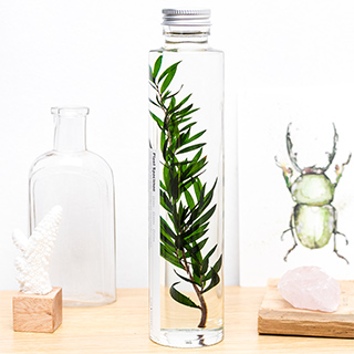 Plant in a large bottle - Slow Pharmacy 7